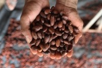 In 2014, Fair Trade Certified cocoa imports grew 42%  Source: Fair Trade USA