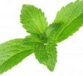 Taste prediction model forms bedrock of Cargill's stevia technology