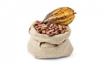 Do younger people respond better to the cardiovascular effects of cocoa flavonoids?