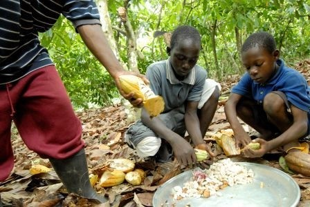International Cocoa Initiative partners with ILO to tackle child ...